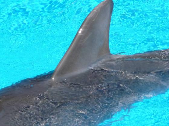 Behr dolphin fin