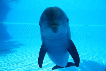 Dolphin Brain And Intelligence